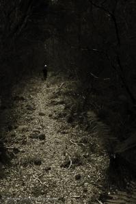 walk-woods.jpg